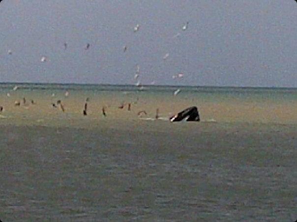 La ballena jorobada que visita Paraguana, El Pico 2013-03-30