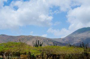KingfisherParaguana34.CerroSantaAnaHumberto4